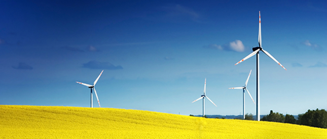 wind turbines on canola field